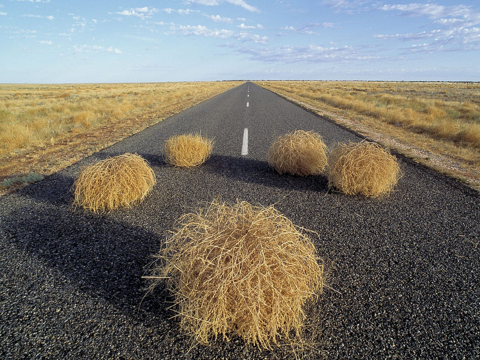 The Political Dad: Tumbleweeds And Math